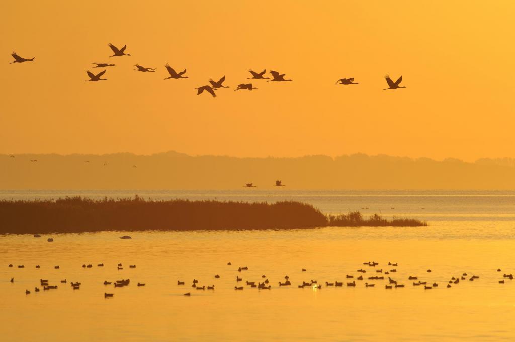 Verbreitung des H5N8-Virus durch Überlappung von Vogelzugwegen möglich (Quelle: Rolfes/DJV)